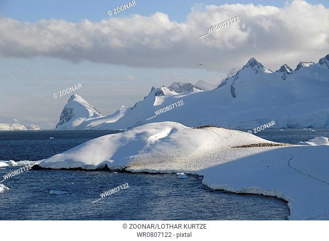 Cuverville Island, Antarctic Peninsular