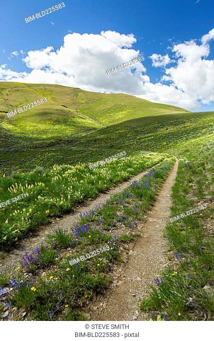 Dirt path in rolling landscape
