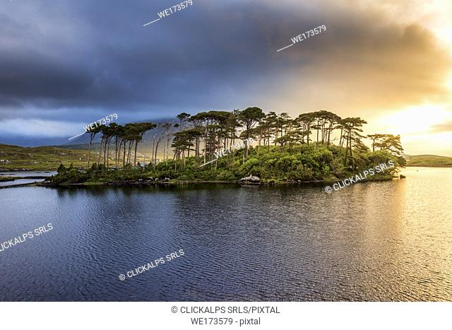Connemara, County Galway, Connacht province, Ireland, Europe. Lough Inagh lake with Pines Island