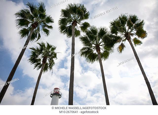 Long Beach Lighthouse among Palm Trees