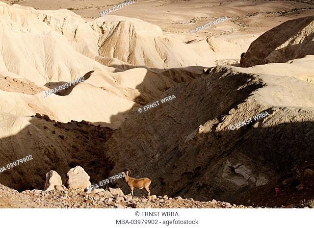 Nahal Zin Canyon, Sde Boker, Negev desert, Israel