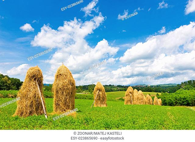 Traditional hay stacks on the field