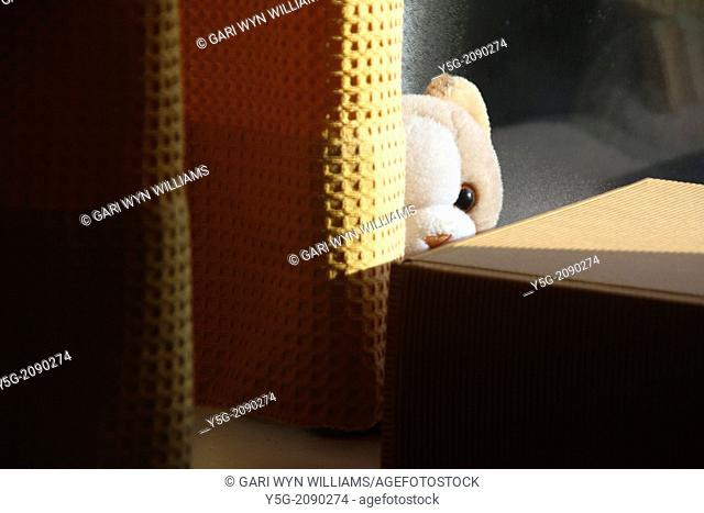 teddy bear soft toy hiding behind curtians in a room