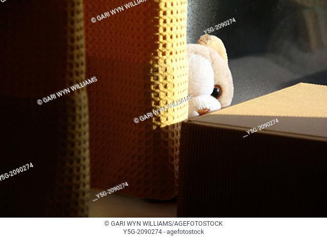 teddy bear soft toy hiding behind curtians in a room