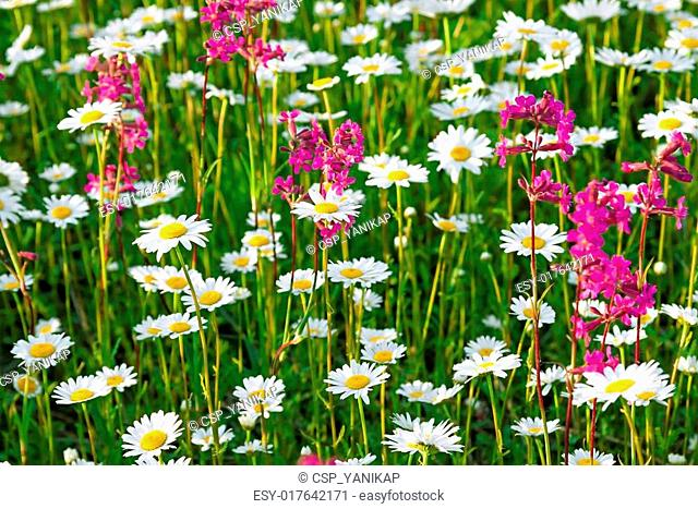 multi colored flowers blossoming on a meadow