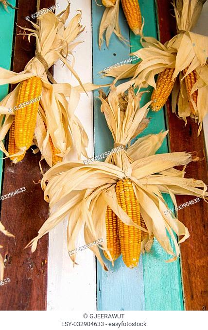A lot of dry corns on wooden wall3