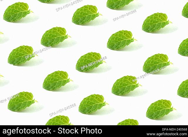Minimal composition pattern background of green mint leaves on white isolated background. Pattern made of mint leaf