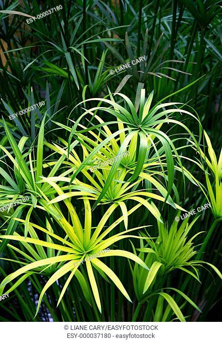 Rain forest plants. Costa Rica
