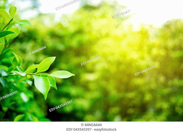 Green leaf with copy space use for design concept takes with soft focus and closeup in nature view on blurred greenery background in the garden