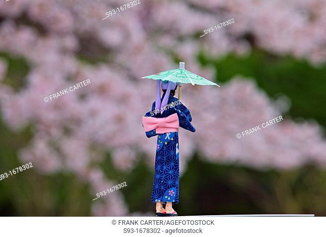 A small doll under the cherry blossoms on the Path of Philosophy