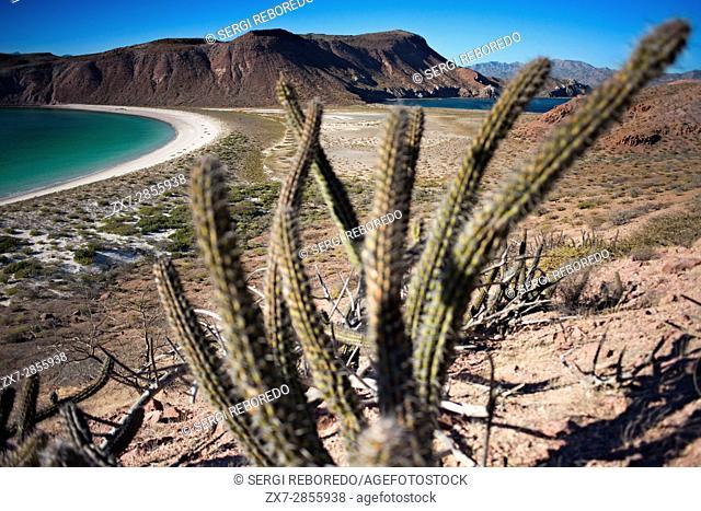 Isla San Francisco, Sea of Cortes, Baja California Sur, Mexico