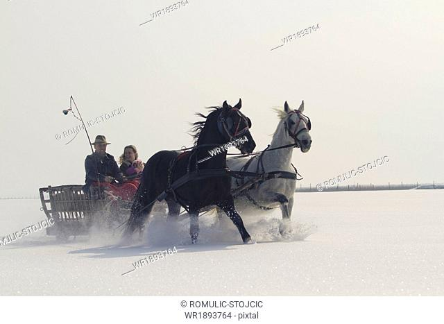 Horse-drawn carriage in the snow, Baranja, Croatia