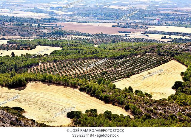 Country in Almonacid de Zorita. Guadalajara. Castilla la Mancha. Spain. Europe