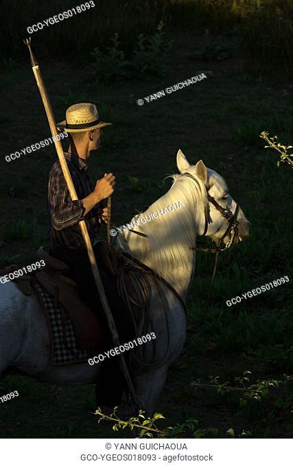 A gardian the cowboy in the camargue, keeping bulls