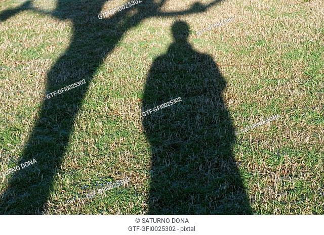 shadow of man and tree
