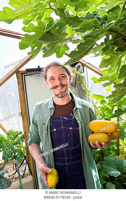 Caucasian gardener picking vegetables in greenhouse