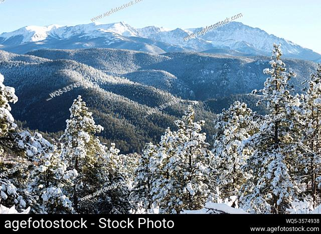 Fresh snow blankets the forest at the base of Majestic Pikes Peak Colorado