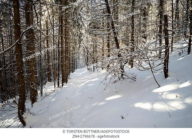 Hiking Trail in Hoher Nock mountain area in Limestone Alps National Park in Winter, Upper Austria, Austria