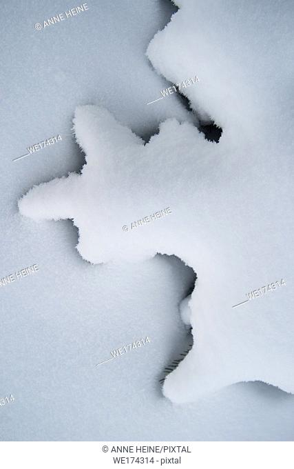 Abstract shape of twigs of fir covered by snow, white on white with shadow separating