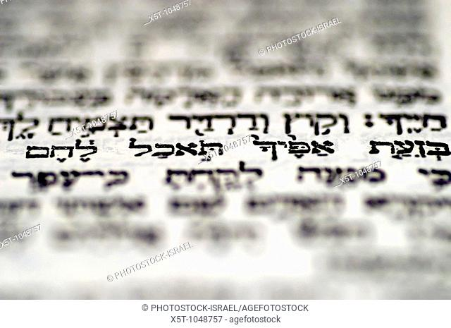 Genesis 3 19: 'in the sweat of thy face shalt thou eat bread' a close up of the Hebrew text in The book of Genesis chapter 3 with this one passage in focus