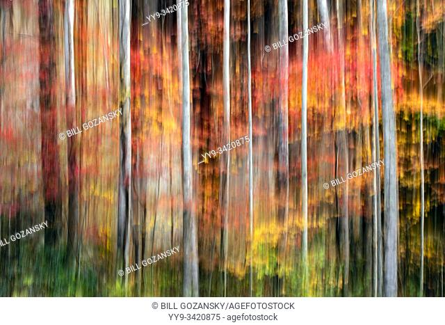 Painterly abstract motion blur of vibrant fall colors in Pisgah National Forest, Brevard, North Carolina, USA