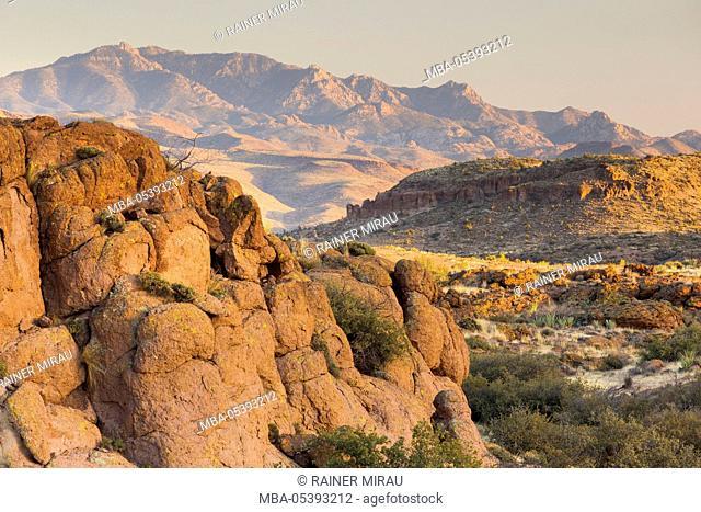 Sonora desert near Phoenix, Arizona, USA
