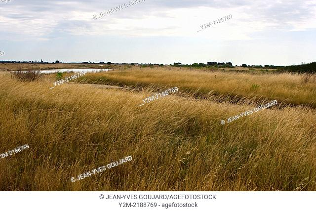 Marsh on the island of Noirmoutier in France