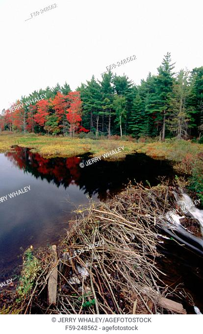 Beaver Dam near the coast of Maine. USA