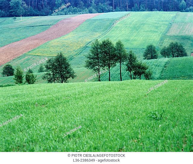 Poland. Swietokrzyski region. Swietokrzyskie mountains
