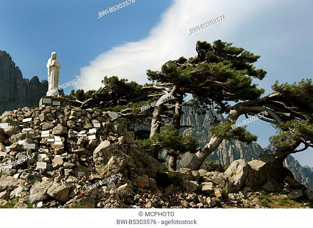 European black pine, Austrian pine, Black Pine, Corsican Pine (Pinus nigra), statue of the Virgin Mary at Col de Bavella, France, Corsica, Bavella Pass