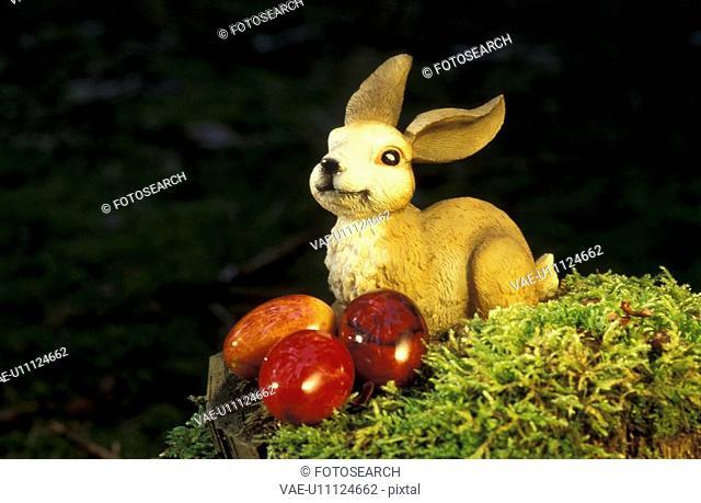 bunny, close-up, CLOSE, aichner