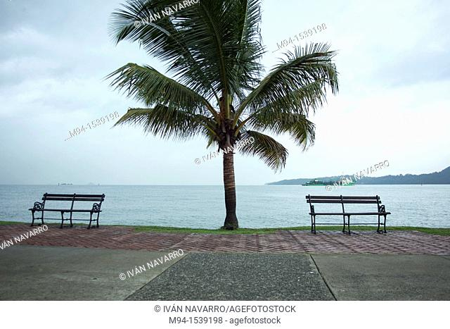 Benches and palm tree