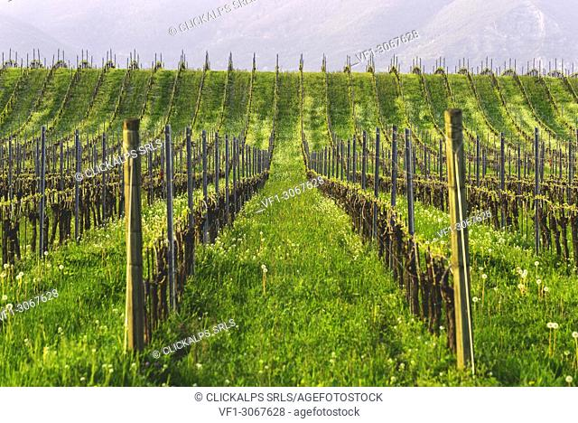 Franciacorta, Lombardy district, Brescia province, Italy