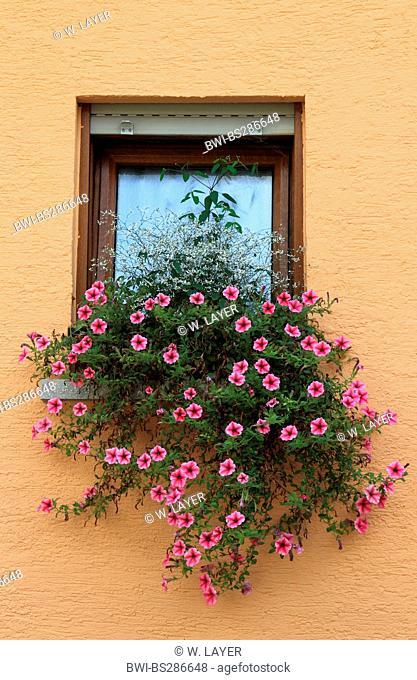 petunia (Petunia spec.), windows with petunias, Germany