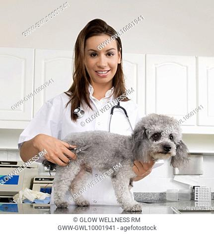 Female vet cutting a dog's hair