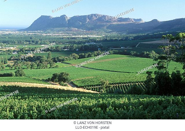Groot Constantia Vineyard Scenic - Elevated View  Peninsula, Western Cape Province, South Africa