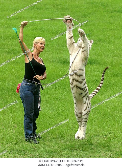 Gloria Johnson, cat trainer working with young Romeo a white siberian tiger at a private breeding facility in Bushnell, Florida