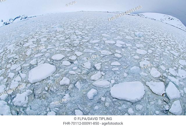 Brash ice at sea, Lemaire Channel, Antarctic Peninsula, Antarctica, november