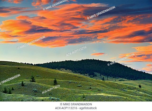 Grasslands ecosystem, Kamloops, British Columbia, Canada