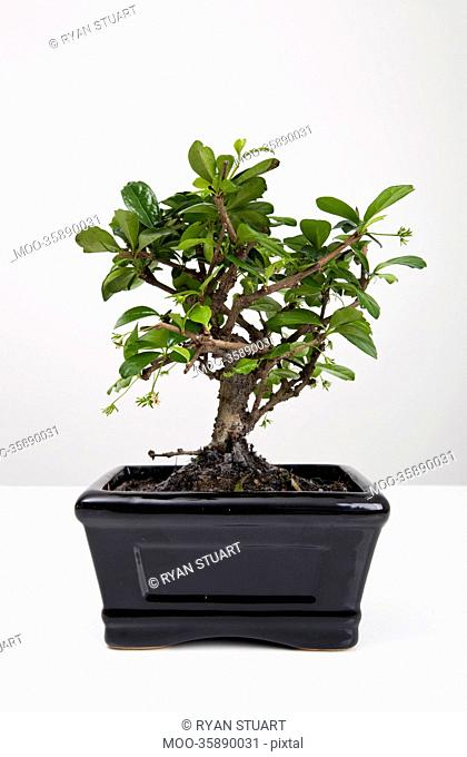 Potted plant on table against gray background