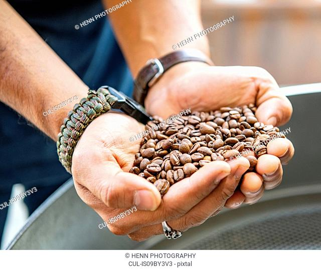Male barista holding handful of roasted coffee beans in independent coffee roaster and cafe, close up of hands, Bangkok