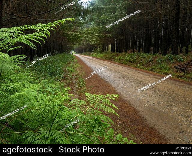 Rural scene near Greytown. KwaZulu Natal. South Africa