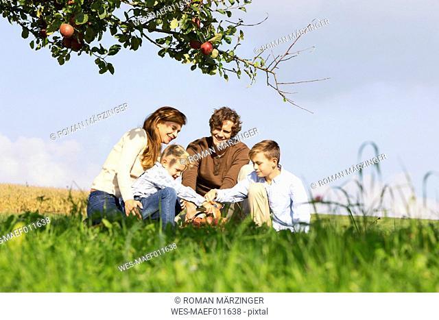Family harvesting apples on rural meadow
