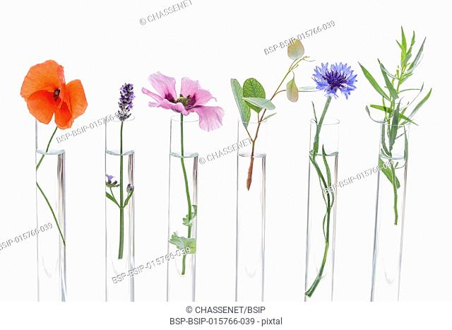 Beautiful flowers on test tube in laboratory, scientist experiment on biology and chemistry
