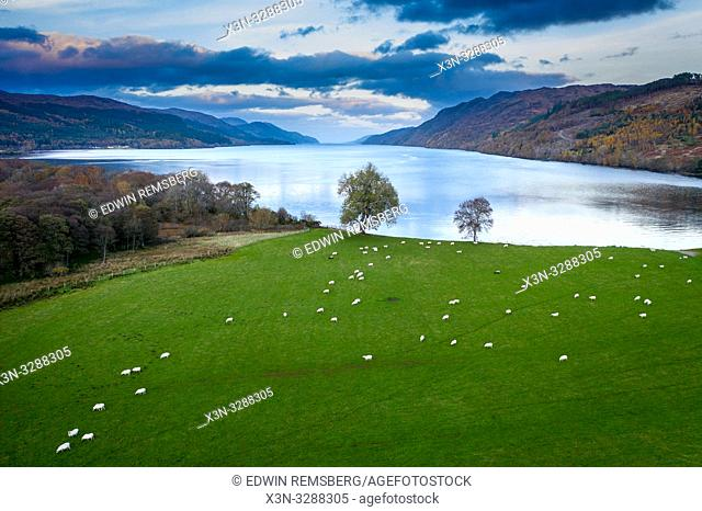 A birds eye view of sheep (Ovis Aries) grazing along the bank of Loch Ness in Scotland, United Kingdom