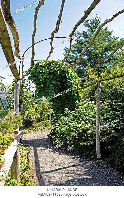 Rustic climbing support for climbing plants as acanopy above a garden path