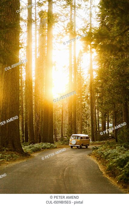 Man driving camper van on sequoia tree lined road, Sequoia National Park, California, USA