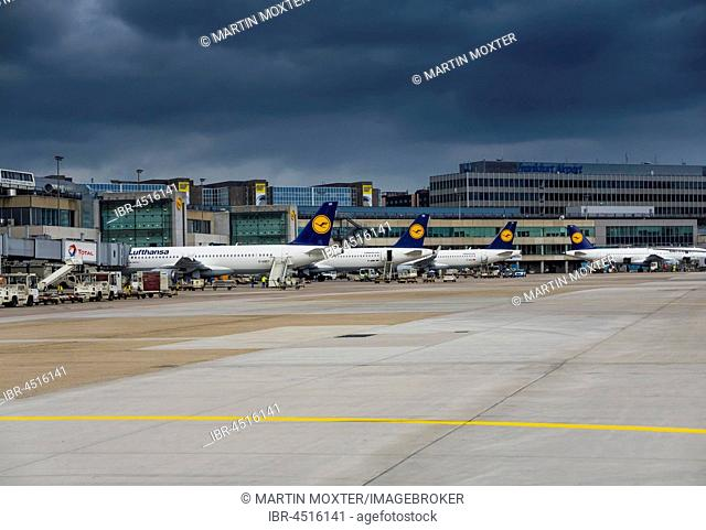 Lufthansa aircraft at Frankfurt airport, Frankfurt am Main, Hesse, Germany
