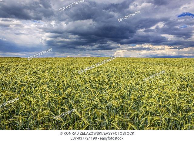 Fields in Polish Jura region in Silesian Voivodeship of southern Poland