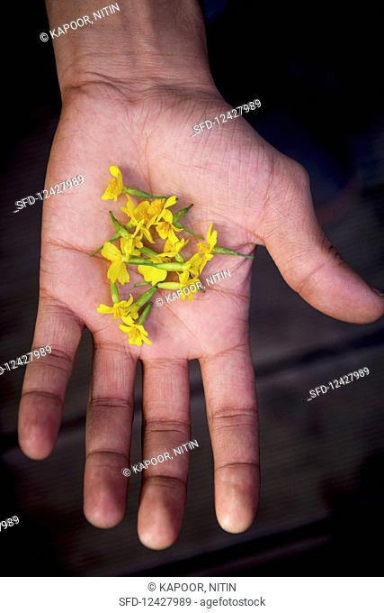 A man holding small marigold flowers (top view)